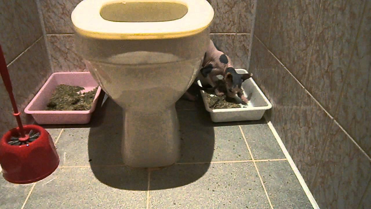 Два лотка в туалете