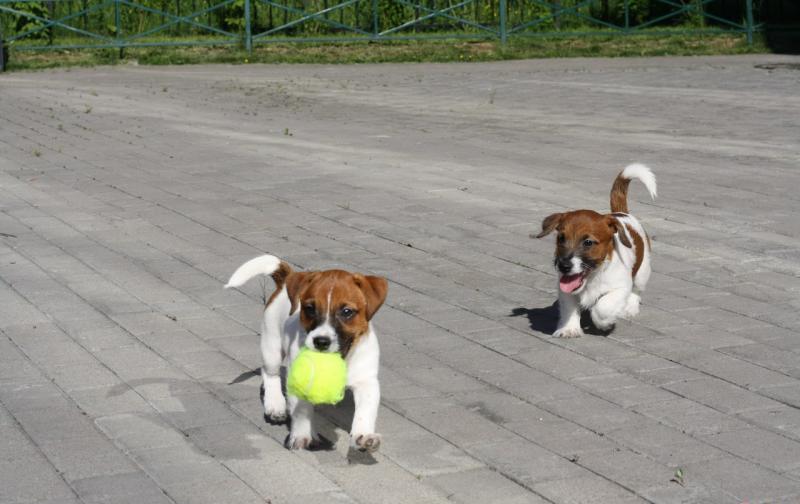 двое щенков играют на улице с мячиком