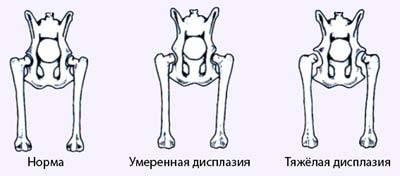 Развитие заболевания у собак и его проявления на разных степенях