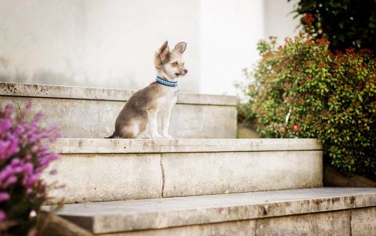 Для собаки, склонной к приступам, любая крутая ступень потенциально травмоопасна