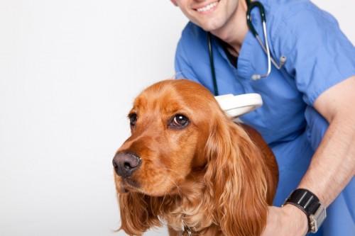 Для установления точного диагноза необходимо обратиться к ветеринару