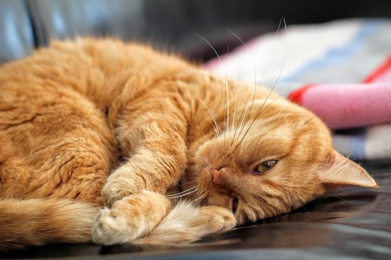 Долгий сон питомца после операции совершенно естественен