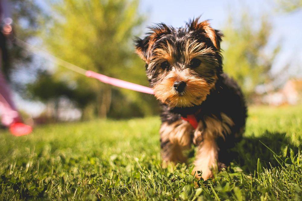 Дронтал быстро выводится из организма собаки, не оставляя сопутствующих веществ