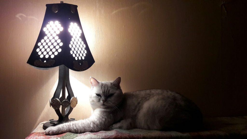 Если же ваш кот не имел доступа к улице, но заразился глистами, имеет смысл проверить квартиру на наличие паразитов