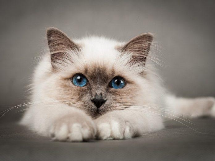 """Если кот вовремя поймет, что """"главный"""" в этом доме - вы, с ним будет легче наладить взаимопонимание"""