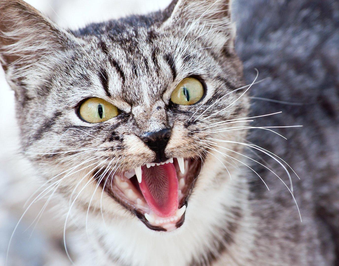 злые животные фото всего без поводкано