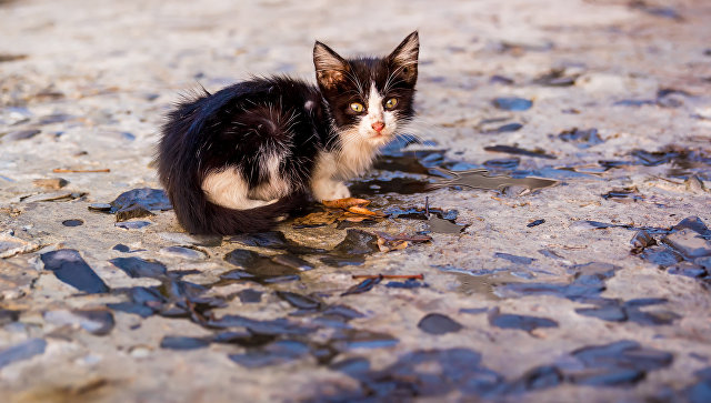 Животные, зараженные паразитами, быстро истощаются при отсутствии правильного ухода