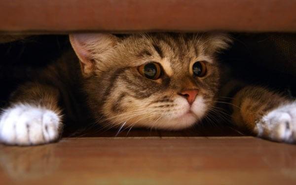 Животные с атаксией предпочитают лежать в тихом спокойном месте