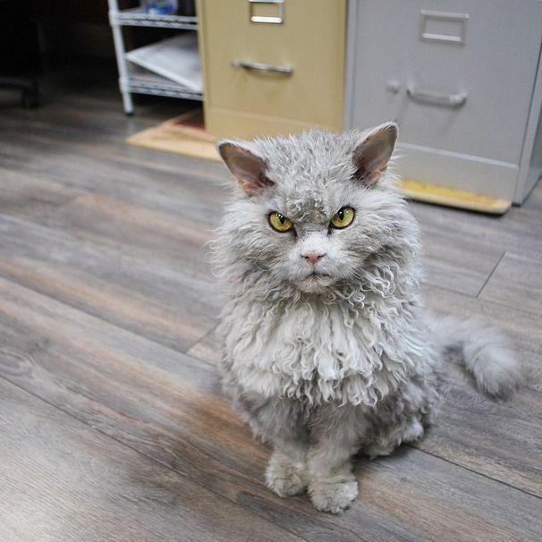 Заблаговременное предупреждение о своем недовольстве - неотъемлемая кошачья черта