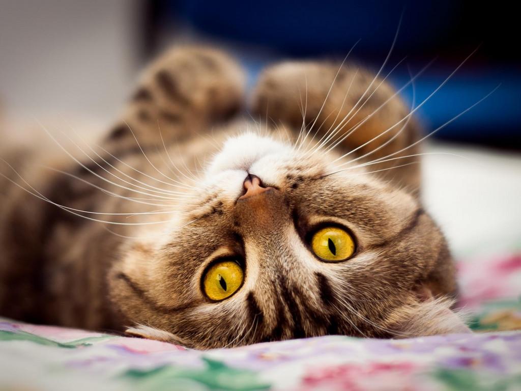 За мнимой расслабленности кота подчас скрывается боевая готовность