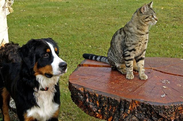 Зенненхунды терпимы к соседству с другими животными