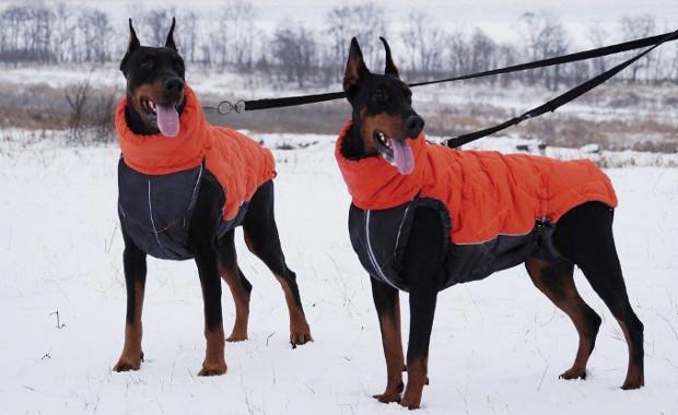 Зимняя одежда для доберманов