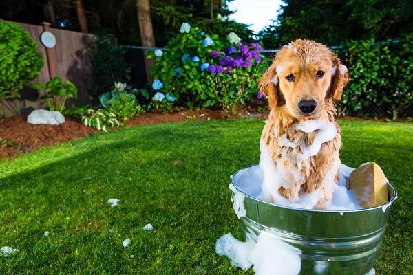 Излечению животного способствует комплексная терапия