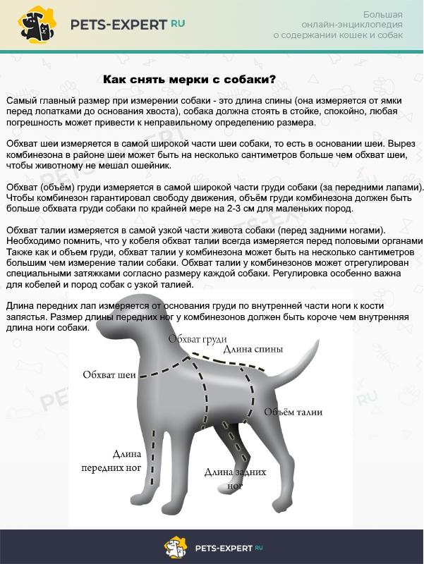 Измерения собаки для покупки или шитья комбинезона