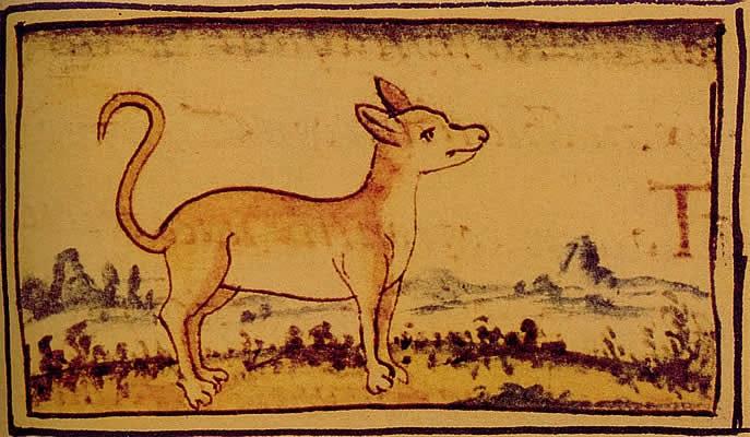 Изображение течичи - древнеацтекских родственников чихуахуа