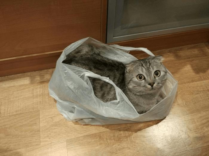 Использовать подручные средства при транспортировке кота не рекомендуется