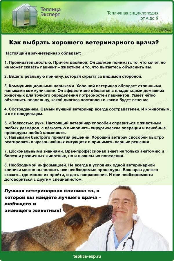 Как определить, что ветеринарный врач - профессионал