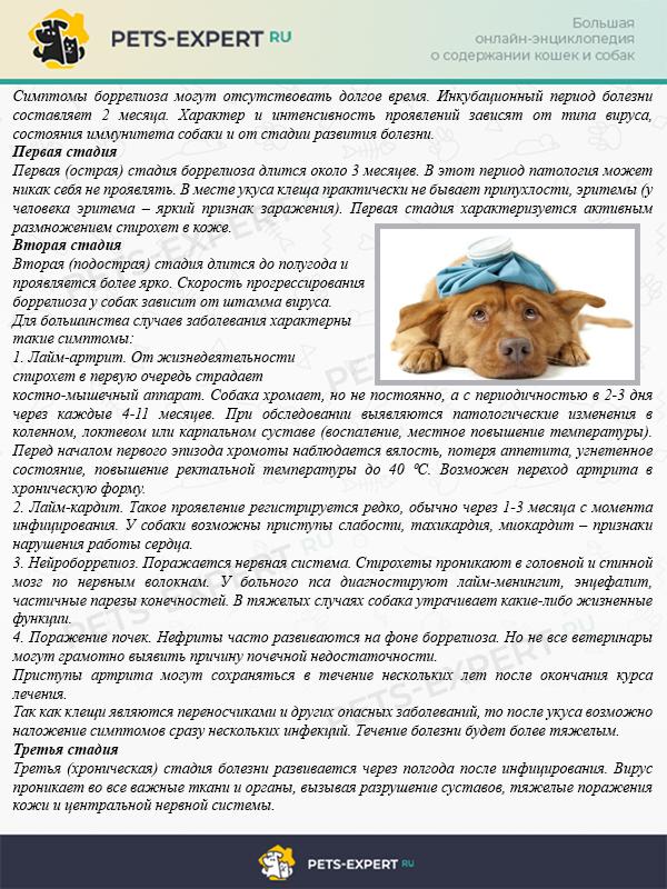 Как понять, что собака больна боррелиозом