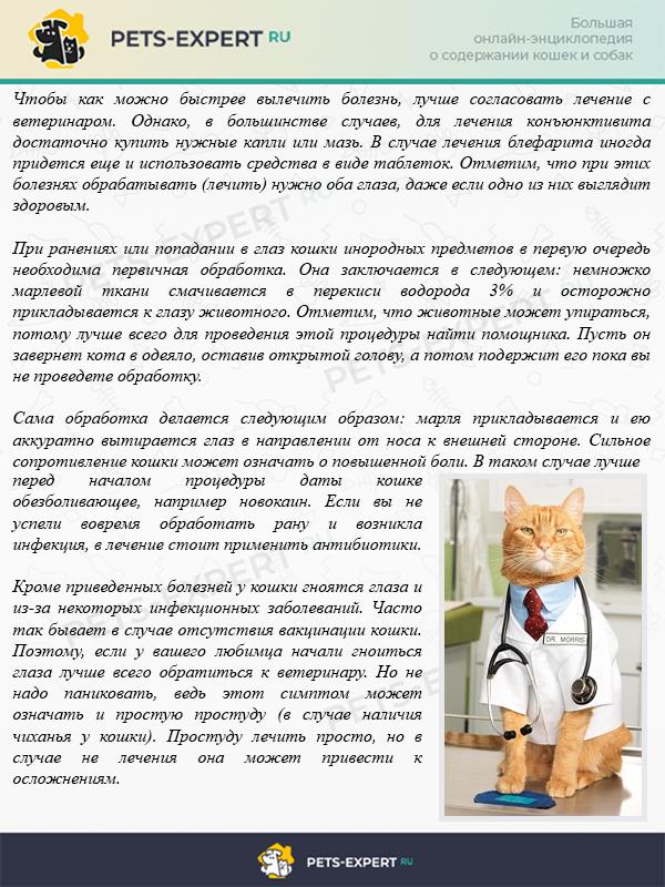 Как проводить лечение глаз у кошки