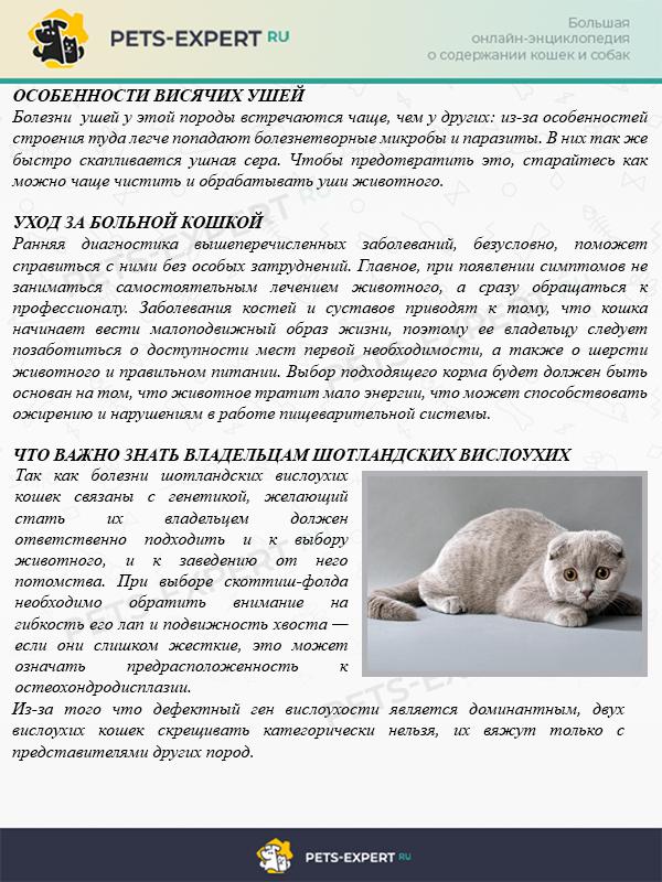 Как ухаживать за больной кошкой