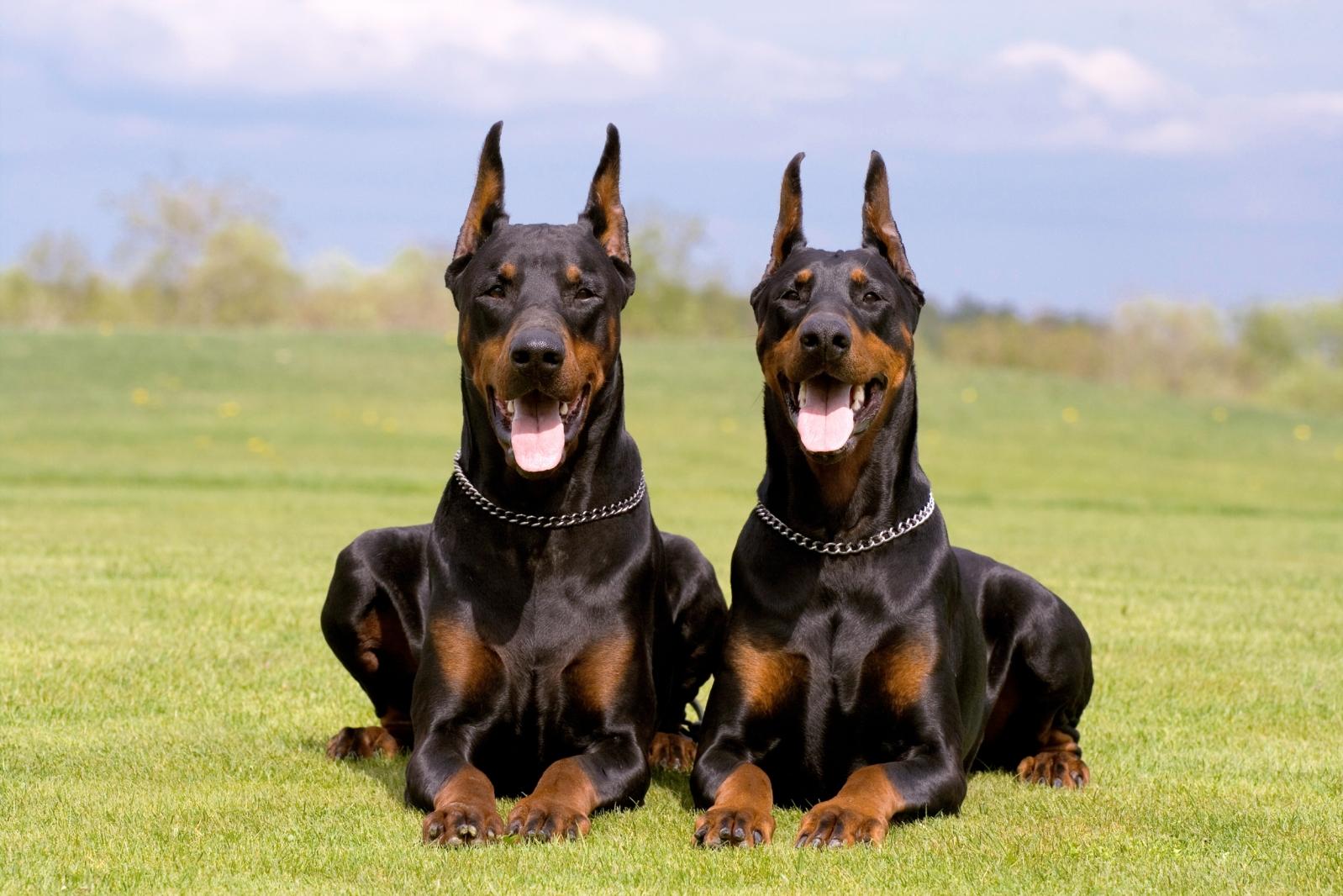 Кличка собаки должна отражать её внешний облик, суть характера