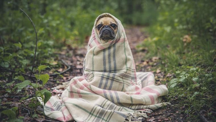 Комфортные условия проживания могу пойти только на пользу собаке