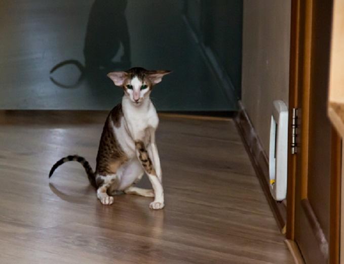 Кошку можно на несколько дней поселить в коридоре