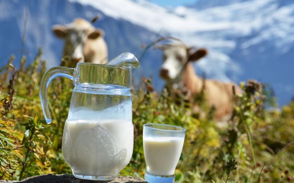 Кормить кота коровьим молоком не только бесполезно, но и опасно для его здоровья