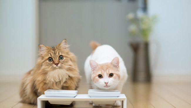 Кормить кота с аллергией необходимо в отдельности от здорового кота