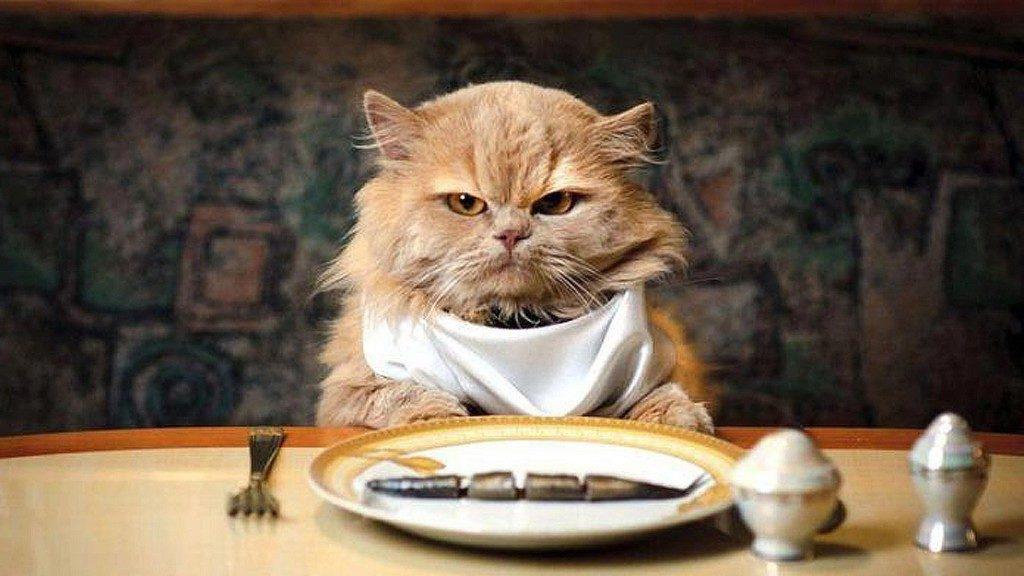 Кота далеко не всегда может устраивать переход на обновленный рацион