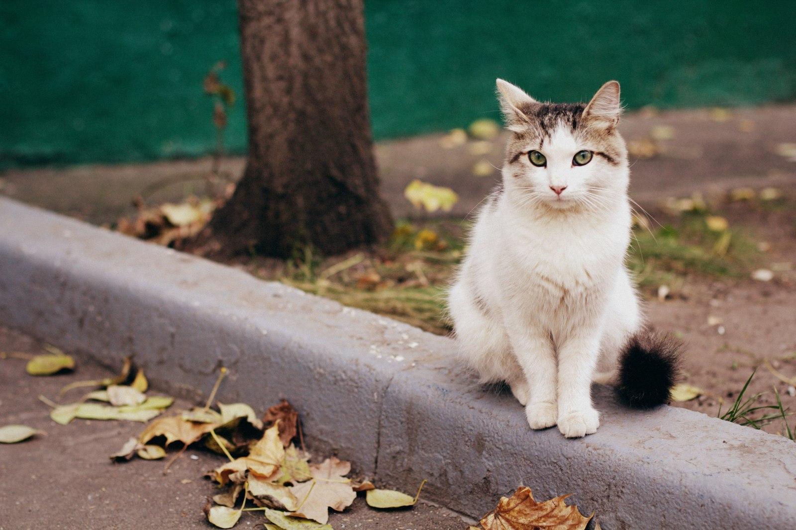 Коты, гуляющие сами по себе, едва ли приручаются, сохраняя свою независимость