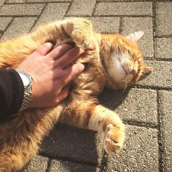 Коты никогда не позволяют себе полностью расслабиться, даже с отлично знакомым им хозяином