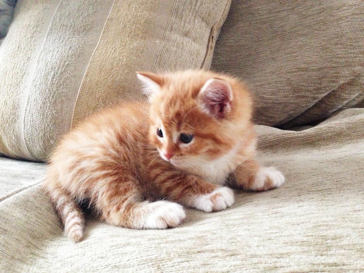 Котёнку нужно давать полтаблетки активированного угля