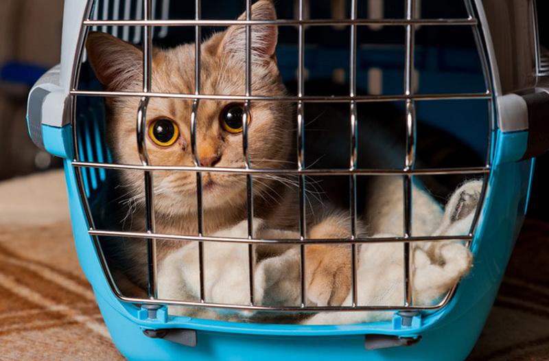 Кот в пластиковом боксе
