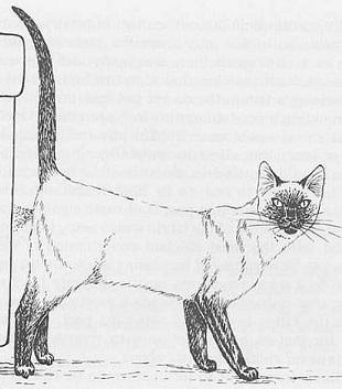 Кот метит свою территорию