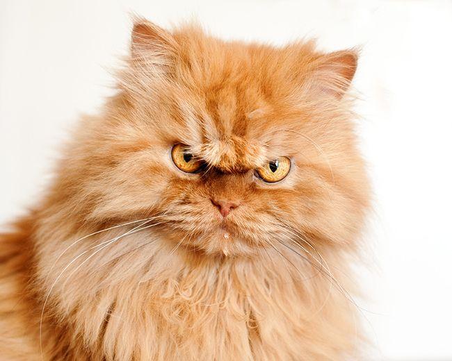 Кот может не получать достаточного количества энергии из плохо сбалансированной диеты
