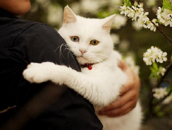 Кот - отличное животное, которое может стать вам компаньоном, другом, и членом семьи. Такой питомец стоит того, чтобы дать отпор аллергии