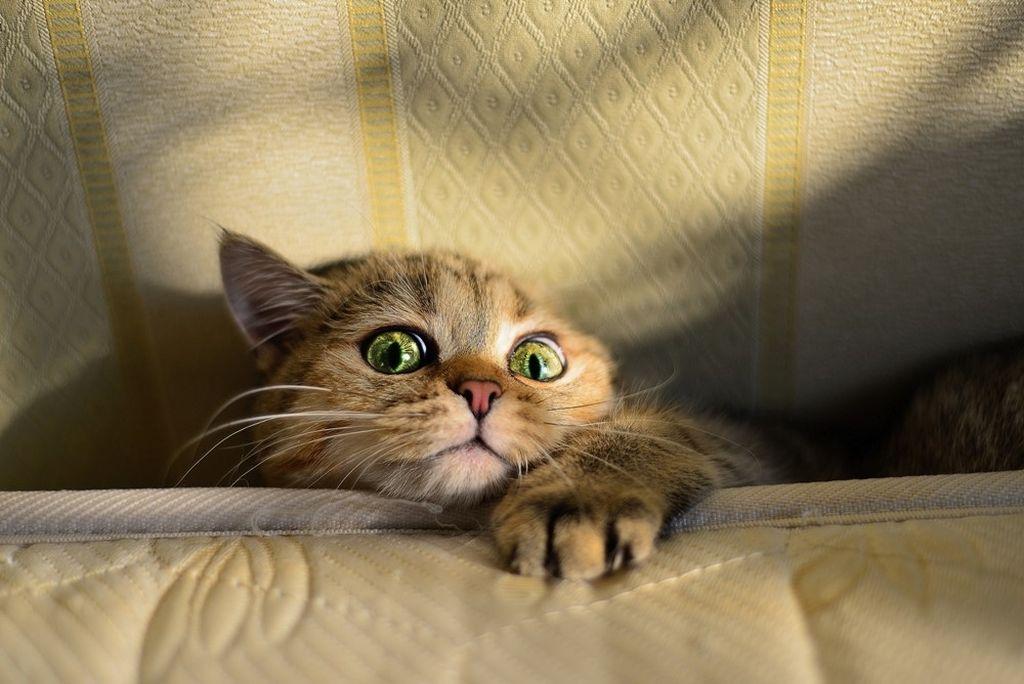 Кот предпочитает избегать столкновений и идет на радикальные меры только в крайних случаях