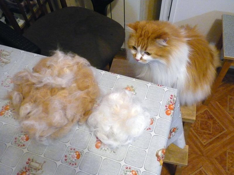 Кошачьей шерсти хватит на любые блюда
