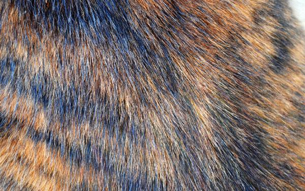Кошачья шерсть часто ошибочно принимается за главного виновника аллергии