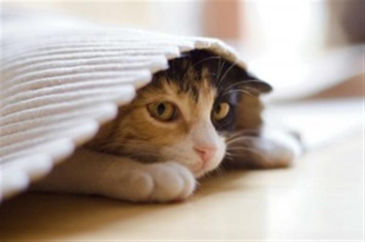 Кошка в состоянии болезни или стресса ищет уединения, а также может справлять свои потребности в неположенных местах