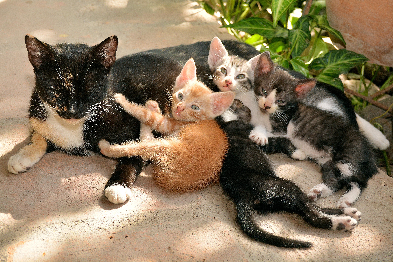 Картинка мамы кошки и котята