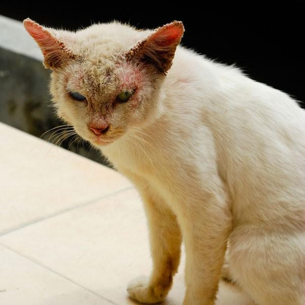 Кошка с лишаём