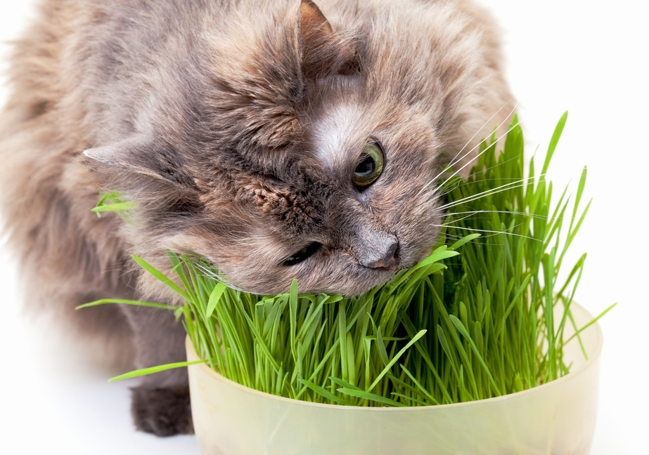 Кошке требуются витамины