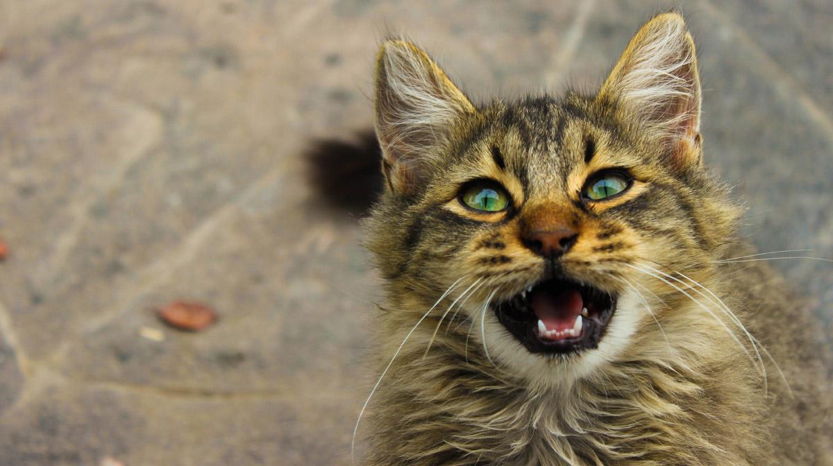 Кто-то полагает, что для котов мы такие же коты, с которыми можно посоперничать, а можно и заключить мир