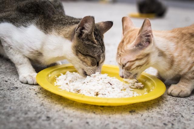 Лечебная диета кота часто бывает на рисовой основе