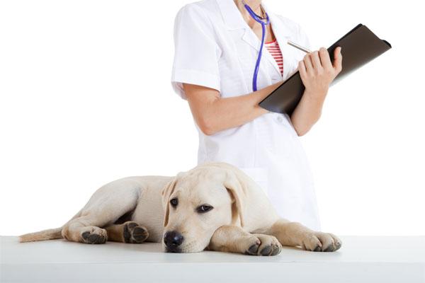 Лечение аллергии у животных может быть лишь комплексным, поскольку указать на источник раздражителя они не могут