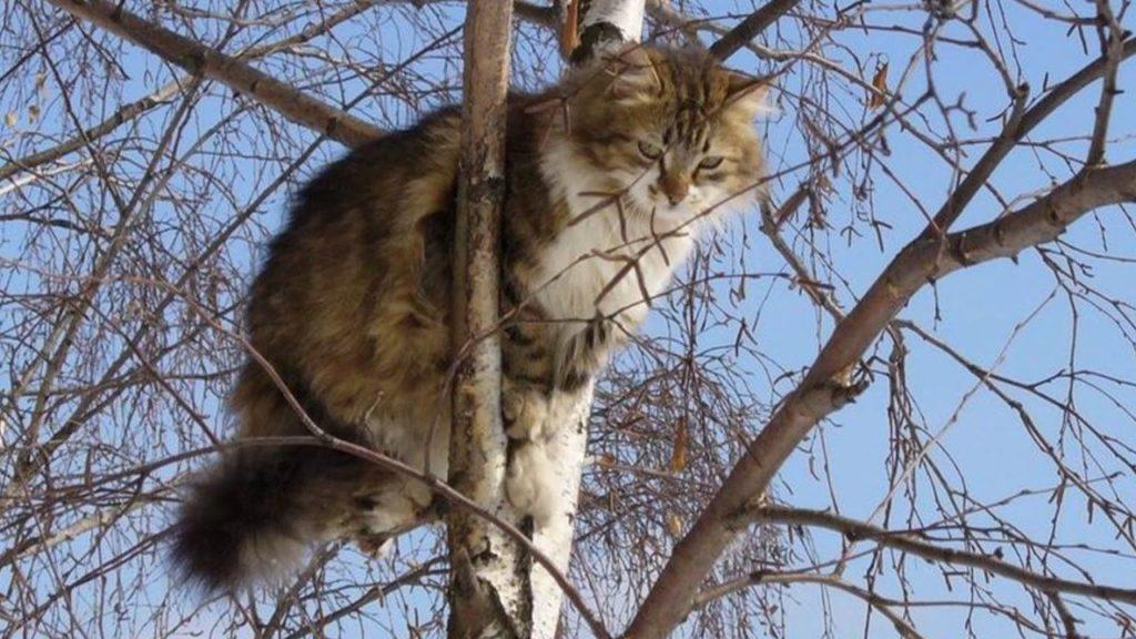 Лишенный деревьев, питомец будет искать их заменители в домашних условиях