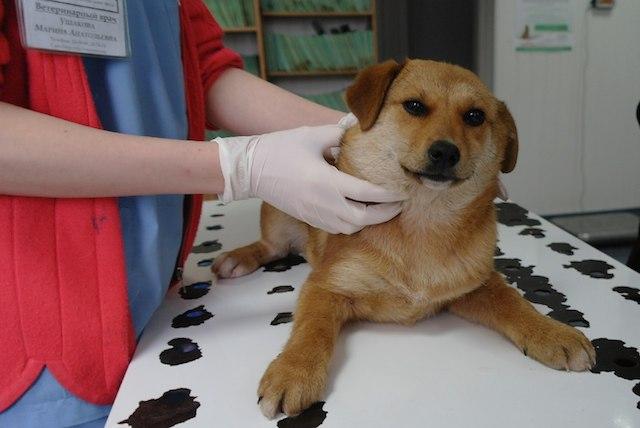 Лучшая профилактика абсцессов - планомерные посещения ветеринара