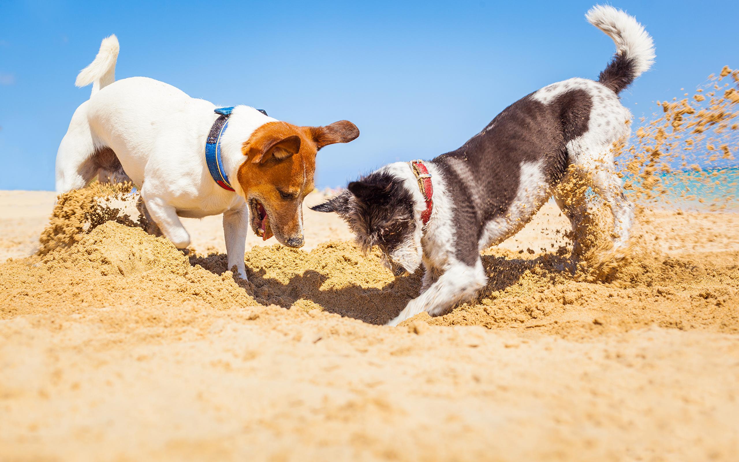 Эти собаки любят копать землю